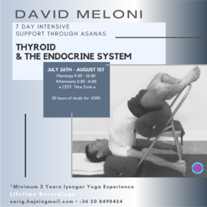 Thyroid & the endocrine system img